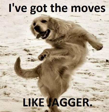 Ive Got The Moves Like Jagger - Funny Dog Dancing