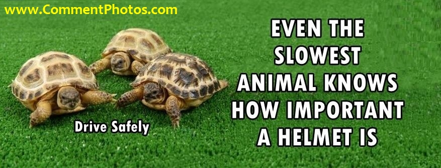 Even the slowest animal on the earth knows How Important A Helmet Is