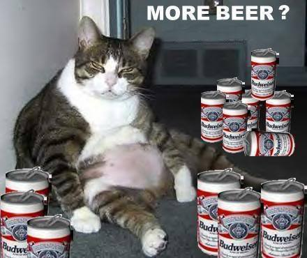 More Beer - Funny Fat Cat Drinking Beer