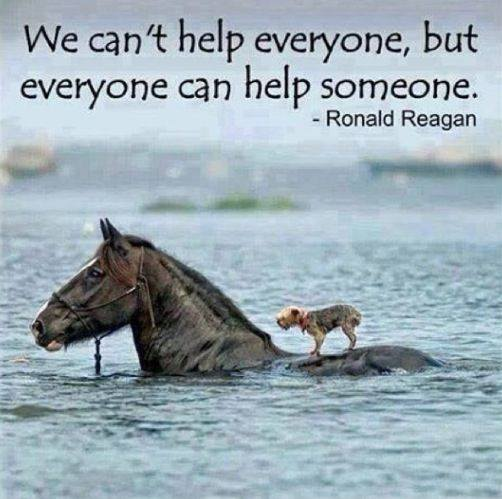 We Cant Help Everyone, but We Can Help Someone - Horse Saves Dog in Flood