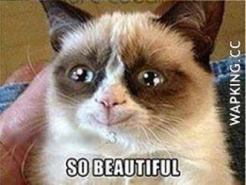 So Beautiful - Grumpy Cat Happy