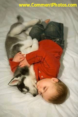 Husky Puppy And Baby