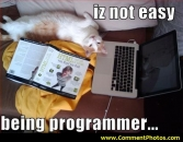 Its not easy being a  programmer - Cat Lying on Laptop