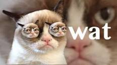 Wat - Funny Angry Grumpy Cat Asks What