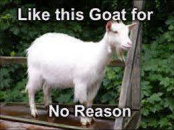 Like This Goat For No Reason - Share