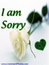 I am Sorry - Rose flower