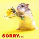 Sorry - Rat with flower