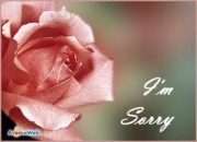 I am Sorry - Rose